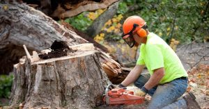 Allout Tree Removal Adelaide