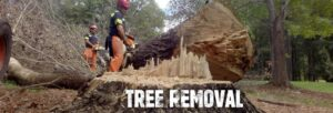 tree removal Melbourne1 300x102